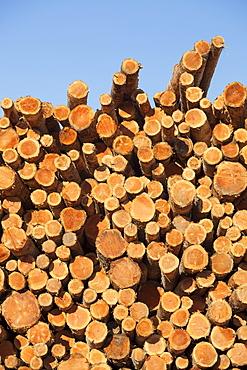 Stacks of logs to be used for lumber, Coos Bay, Or