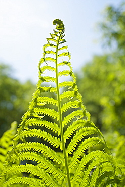 Detail of fern