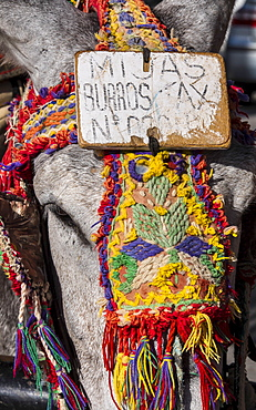 Close up of colorful harness on donkeys head, Mijas, Spain