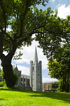 Lawn in front of Saint Patrick's Cathedral