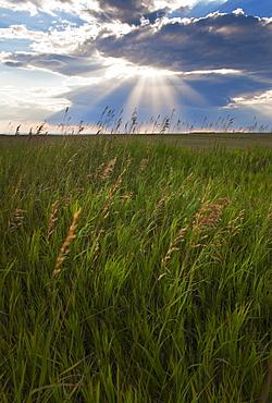 Buffalo Gap National Grasslands, Sunrays shining through clouds over field