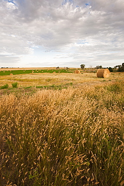 Straw bales on field