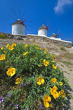 Greece, Cyclades Islands, Mykonos, Flowers near old windmills
