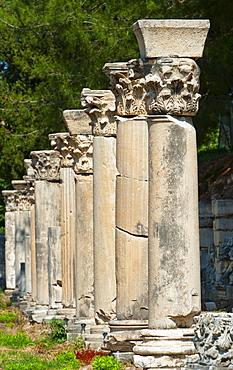 Turkey, Ephesus, Row of Corinthian columns