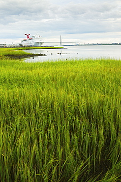 USA, South Carolina, Charleston, Green rushes on riverbank with ferry in background