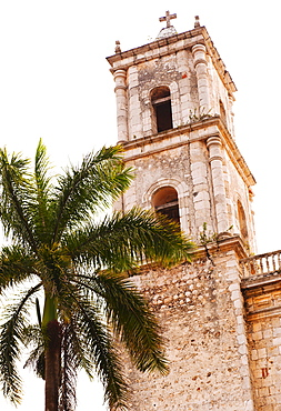 Valladolid, Bell tower and palm tree