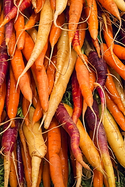 Close-up of carrots on market stall