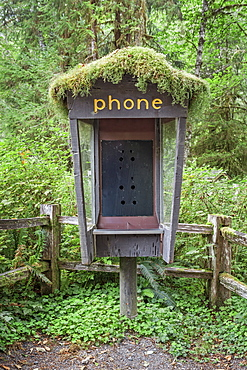 Old phone booth covered with moss, Olympic National Park, Washington