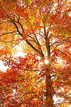 Sun shining through tree branches, Camden, Maine