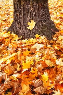 Autumn leaves around tree