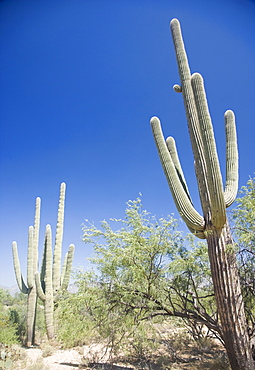 Low angle view of cactus, Arizona, United States