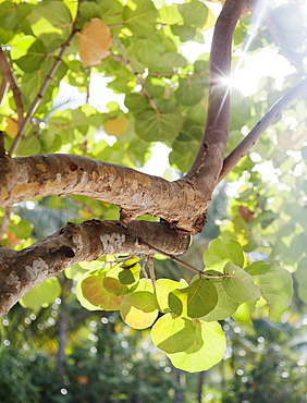 Close up of tree branch and leaves