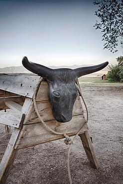Lasso and rack with bull head, Antelope Island, Utah