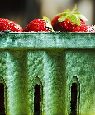 Studio shot of fresh strawberries