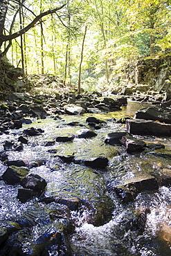 Stream in forest, Newtown, Connecticut