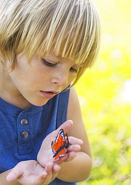 Boy (4-5) watching butterfly - 1178-17925