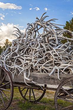 Wagon full of antlers, USA, South Dakota