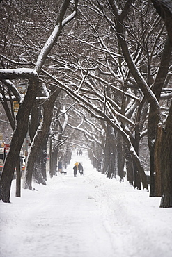 Tree lined path covered in snow