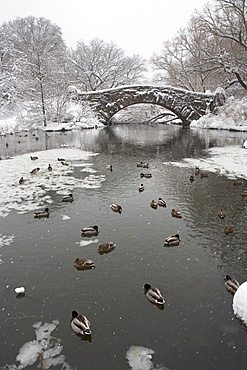 Lake and bridge in winter