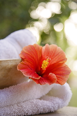 Close up of flower and towel