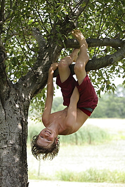 Boy (10-11) hanging upside down on tree branch, Old Wick, New Jersey