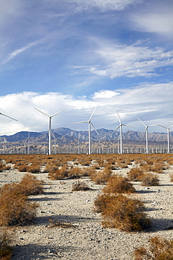 Landscape with wind turbines, Palm Springs, California