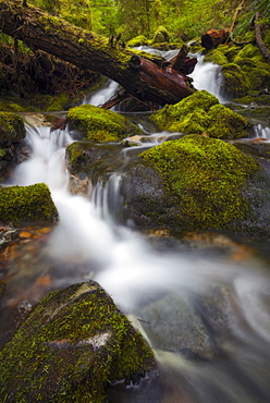 Stream in forest, Marion County, Oregon