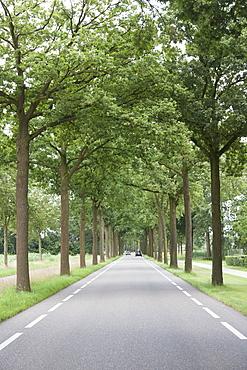 Trees along road, Hilvarenbeek, Netherlands