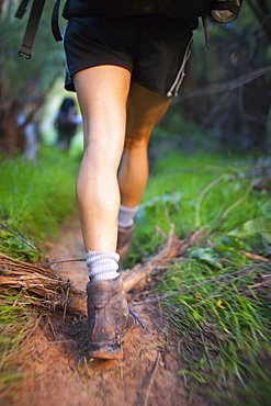 Woman hiking in forest, Grand Gulch, Utah, USA