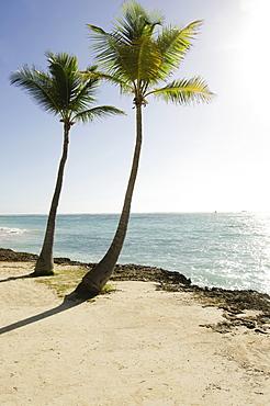 Palm trees on beach, Punta Cana, Dominican Republic