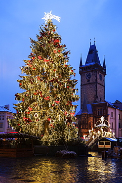 Christmas tree at night, Czech Republic, Prague, Old Town Square