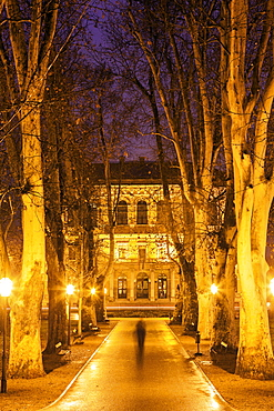 Illuminated treelined alley, Croatia, Zagreb, Croatian Academy of Sciences and Arts