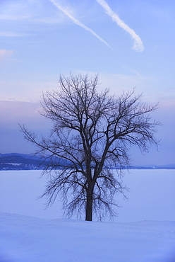 Crown Point, Bare tree in field, USA, New York State, Crown Point