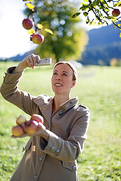 Austria, Salzburger Land, Maria Alm, Mature woman photographing apples on tree
