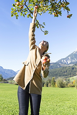 Austria, Salzburger land, Maria Alm, Mature woman picking apples from tree