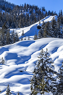Pine trees in snow on mountain in Sun Valley, Idaho, USA
