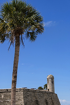 Palm tree by Castillo de San Marcos in St. Augustine, USA