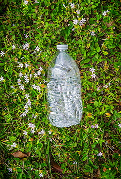Plastic bottle on grass
