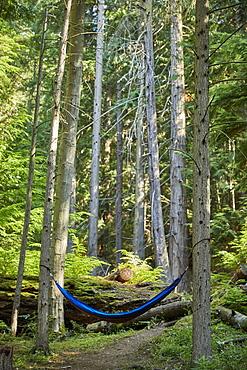 USA, Washington, San Juan County, Orcas Island, Hammock in trees