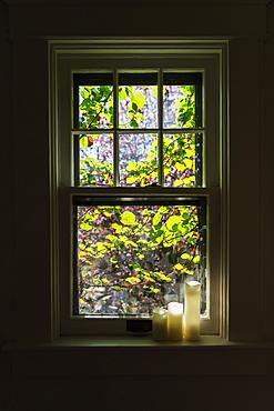 Vine outside open window
