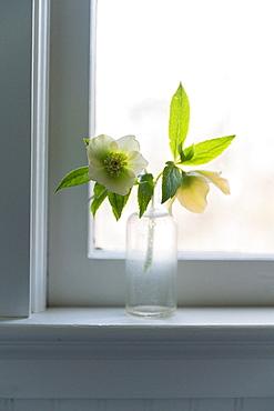 Spring flowers in glass bottle on window sill
