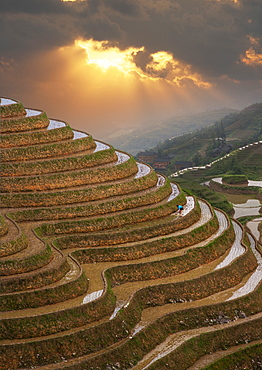 China, Guangxi, Guilin, Longsheng, Terraced rice fields at sunset