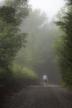 USA, Georgia, Rear view of woman walking on treelined road in fog, Blue Ridge Mountains