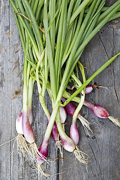 Ramps with roots and stems on wooden table
