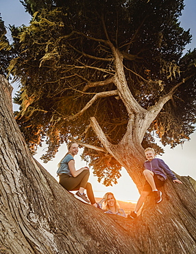 United States, California, Cambria, Mother with son (10-11) and daughter (12-13) sitting on tree in landscape at sunset