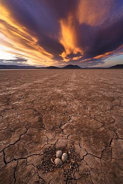 United States, Oregon, Sunset sky over desert with birds eggs in nest