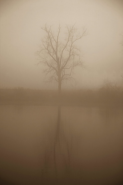Tree in mist, Norfolk, Virginia, USA