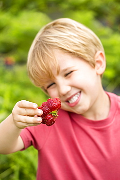 Portrait of young boy holding misshapen strawberry