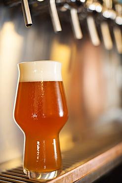 Beer resting under beer taps