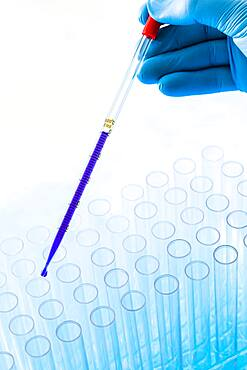 Gloved hand holding pipette with blue liquid above test tubes